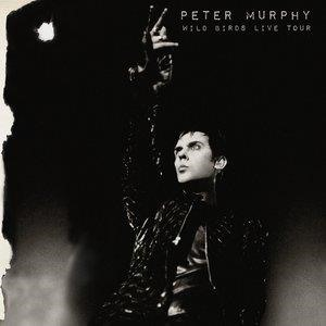 Альбом Peter Murphy - Wild Birds Live Tour