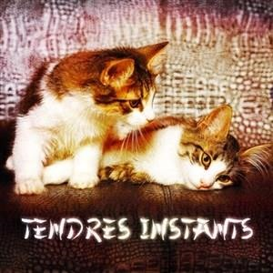 Альбом: Zen - Zen & Relaxation: Tendres instants